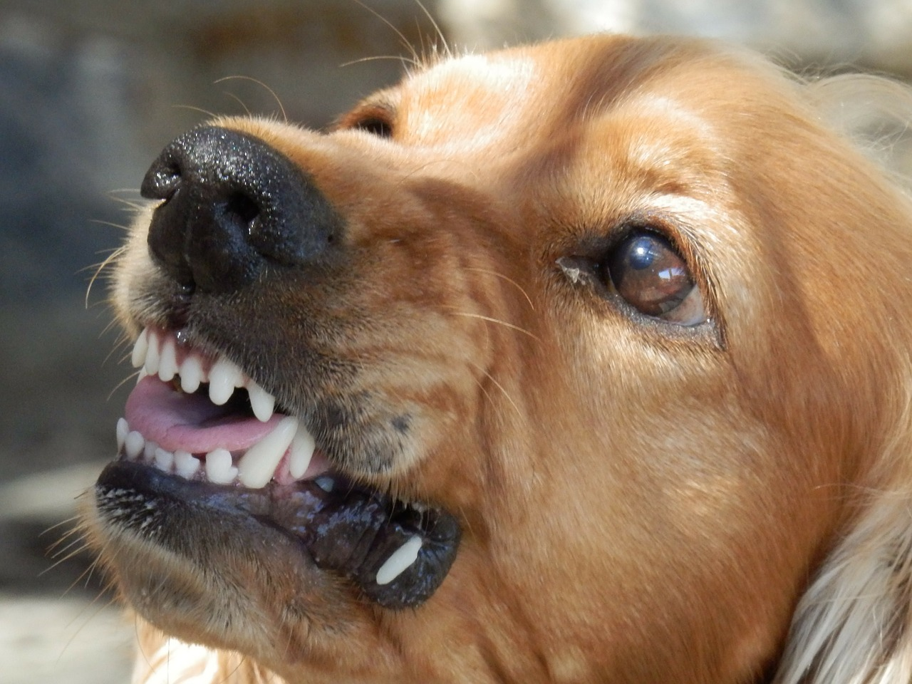 When The Bite Is Worse Than The Bark: Dealing With A Dog Bite